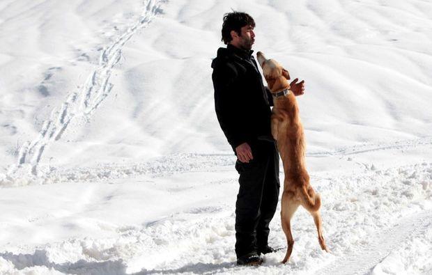 schlittenhunde-fahrt-trentino-suedtirol41510845324