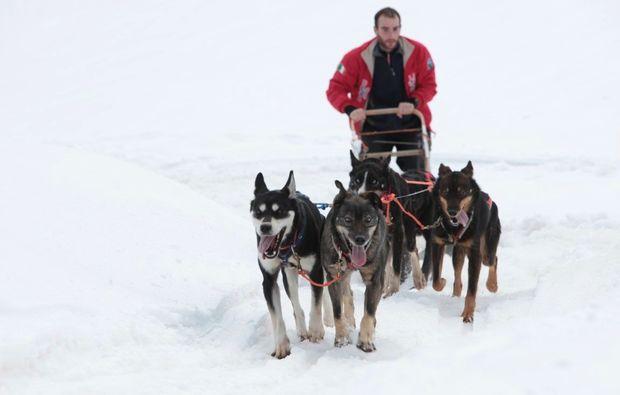 schlittenhunde-fahrt-trentino-suedtirol515108453591510845968
