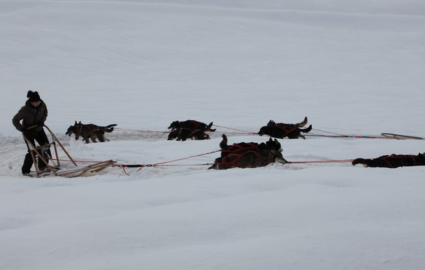 schlittenhunde-fahrt-trentino-suedtirol81510845457