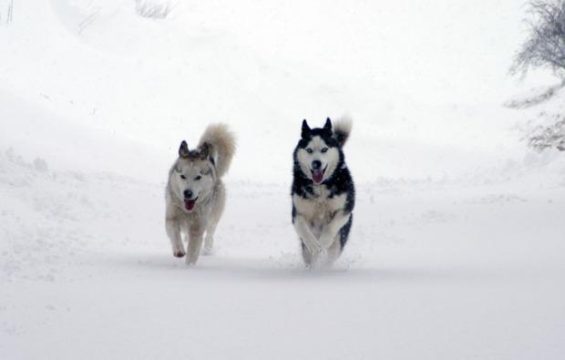 schlittenhundefahrt-schwabmuenchen-bg6
