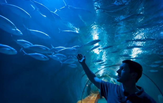 traumtag-fuer-zwei-muenchen-sea-life