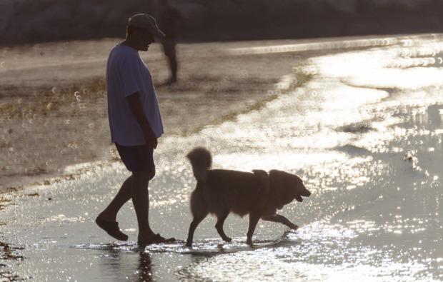 urlaub-mit-hund-ostia-antica-hundespass
