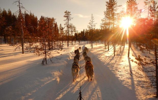husky-abenteuer-trip-asele-natur