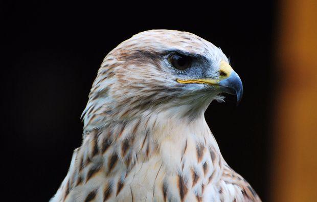 falkner-erlebnis-pfarrwerfen-bg5