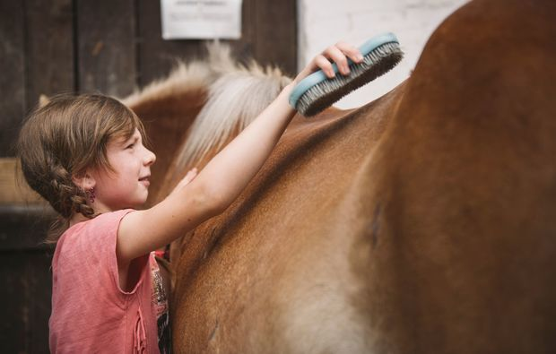 pferde-abenteuer-gams-bei-hieflau-pferd
