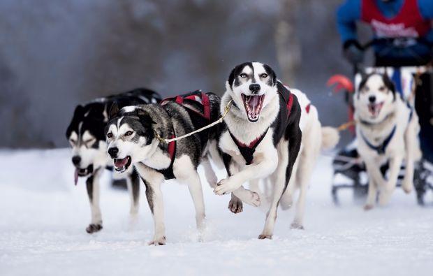 schlittenhundefahrt-telfs-bg2