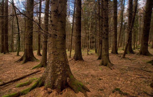 erlebnisreise-game-of-thrones-irland-wald
