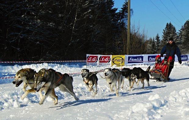schlittenhundefahrt-alt-nagelberg-schnell