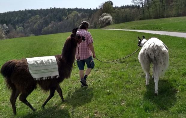 lamatrekking-neudorf-outdoor
