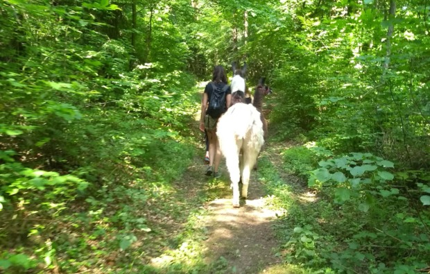 lamatrekking-neudorf-waldweg