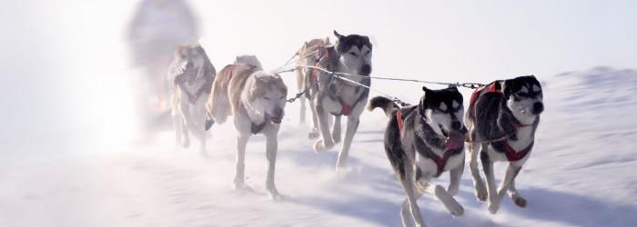 Husky-Trekking