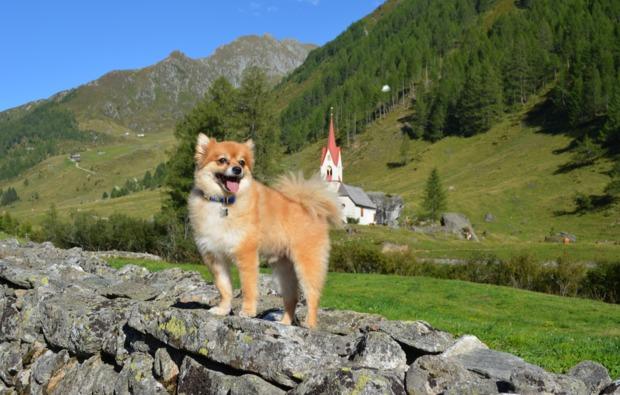 urlaub-mit-hund-steinhaus-im-ahrntal