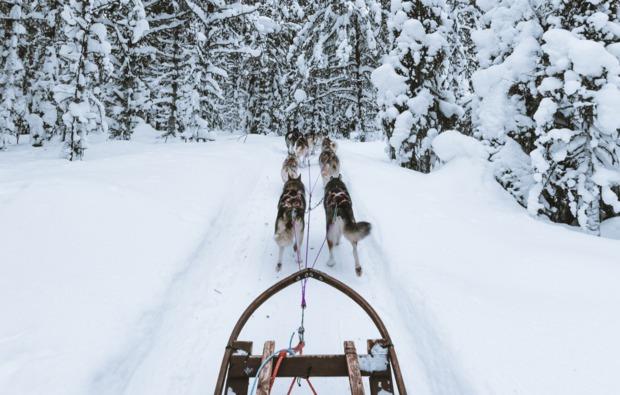 aktivurlaub-arvidsjaur-husky-schlittenfahrt