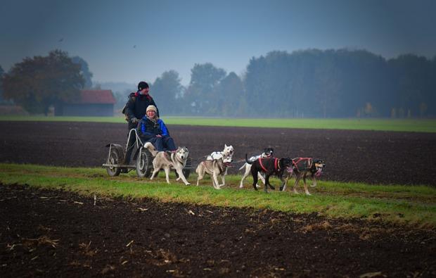 schlittenhundefahrt-schwabmuenchen-husky-training