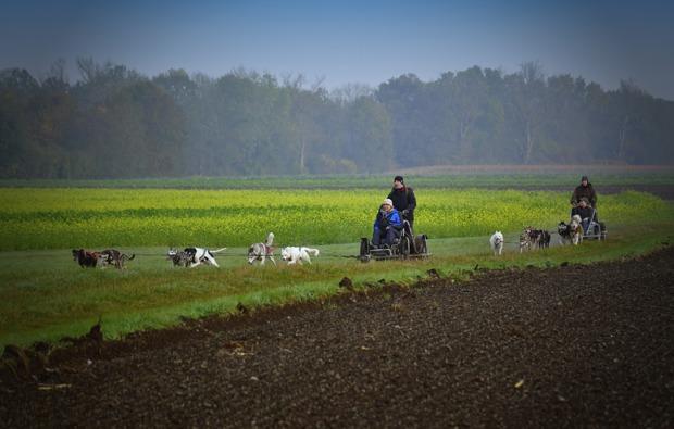 schlittenhundefahrt-schwabmuenchen-natur