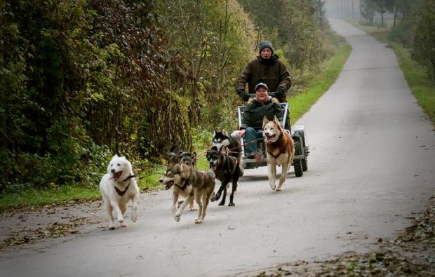 schlittenhundefahrt-schwabmuenchen