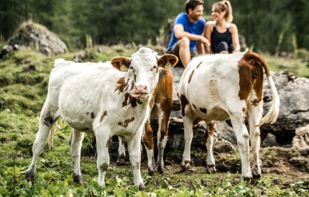 kurztrip-kirchberg-tirol-kuehe