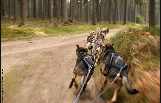 schlittenhundefahrt-alt-nagelberg-abenteuer