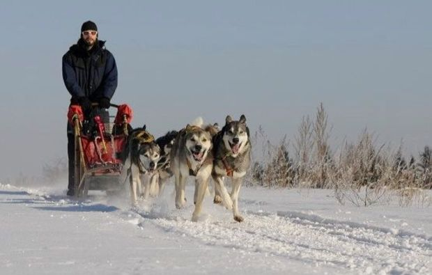 schlittenhundefahrt-alt-nagelberg-action