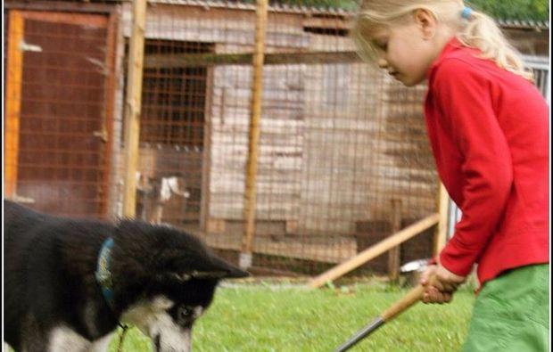 schlittenhundefahrt-alt-nagelberg-erlebnis1482500097