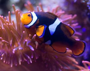 dinner-unterwasser
