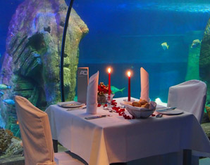 sea life candle light dinner reinickendorf