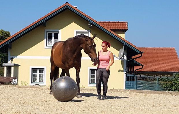pferde-abenteuer-markersdorf-ball