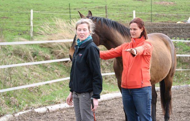 pferde-abenteuer-markersdorf-pferd