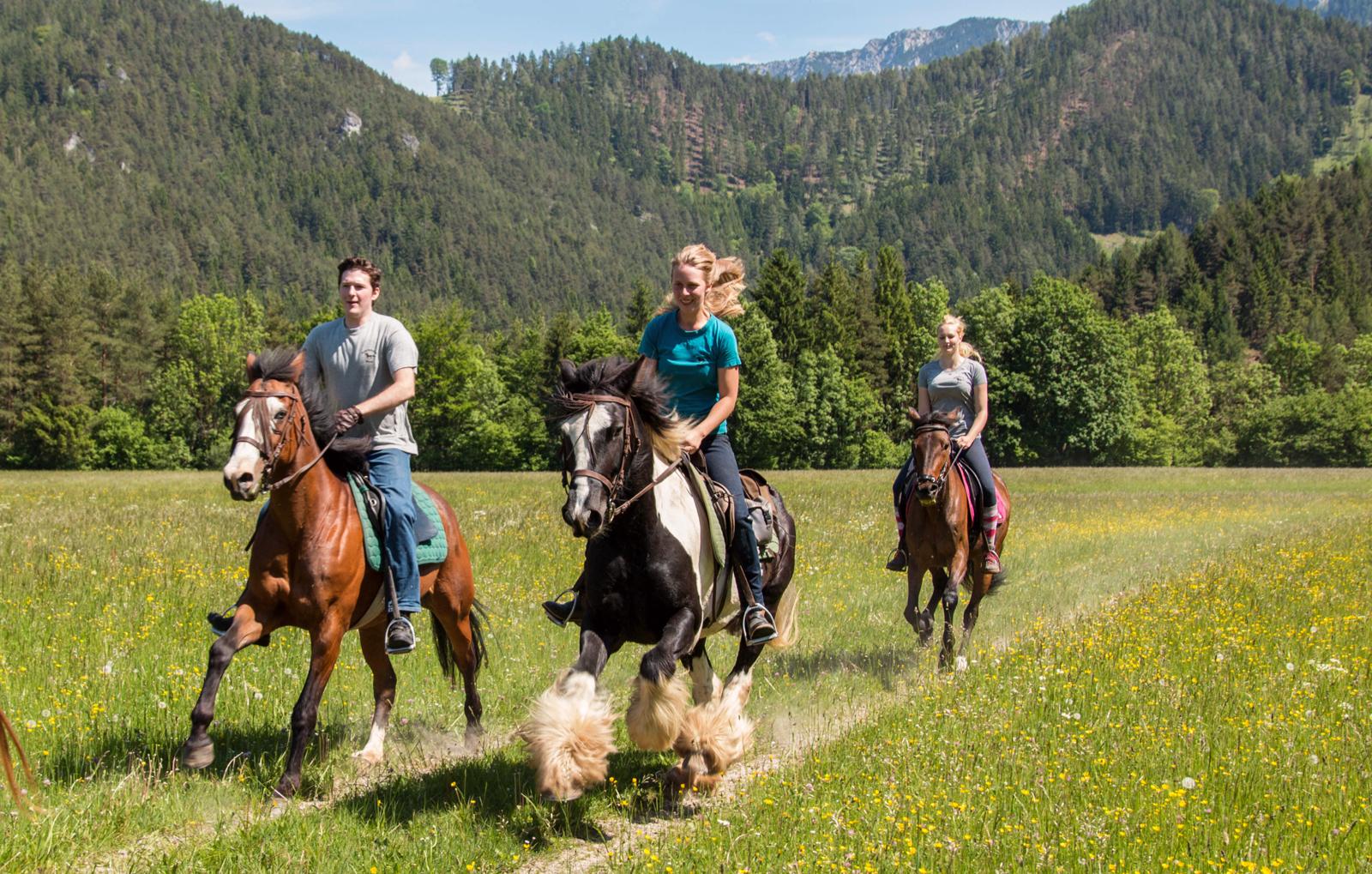 pferde-abenteuer-sankt-aegyd-am-neuwalde-bg1
