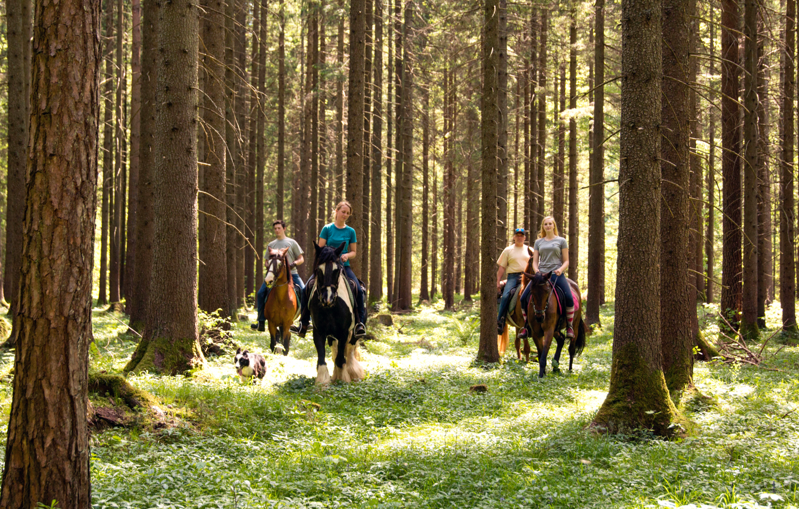 pferde-abenteuer-sankt-aegyd-am-neuwalde-bg4