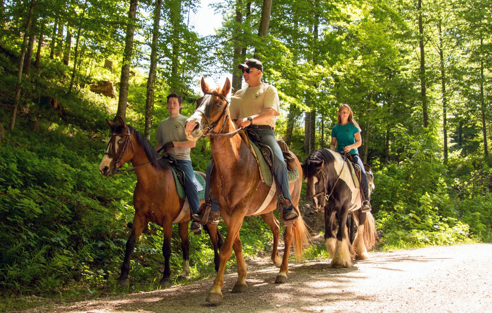 pferde-abenteuer-sankt-aegyd-am-neuwalde-bg5