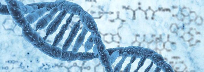DNA Analysieren