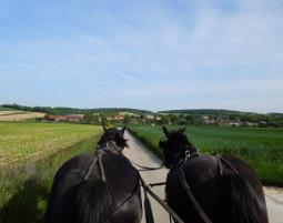 pferde-kutschfahrt-weitersfeld1