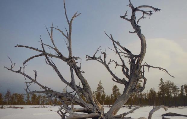 husky-abenteuer-trip-asele-unberuehrte-natur