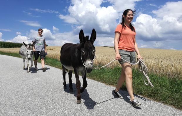 eseltrekking-tagestour-lichtenau-im-waldviertel-wandern