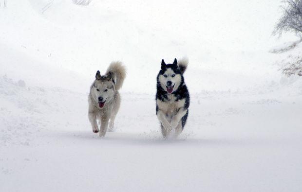 husky-trekking-schwabmuenchen-bg1