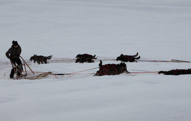 schlittenhunde-fahrt-trentino-suedtirol81511194640