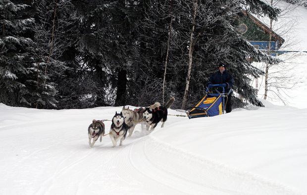 schlittenhundefahrt-ettal-bg4