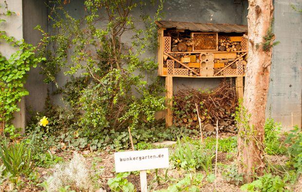 stadt-kultour-koeln-bunkergarten