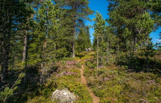 aktivurlaub-an-land-torsby-wanderlust