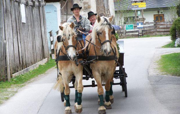 pferde-abenteuer-gams-bei-hieflau-ausflug