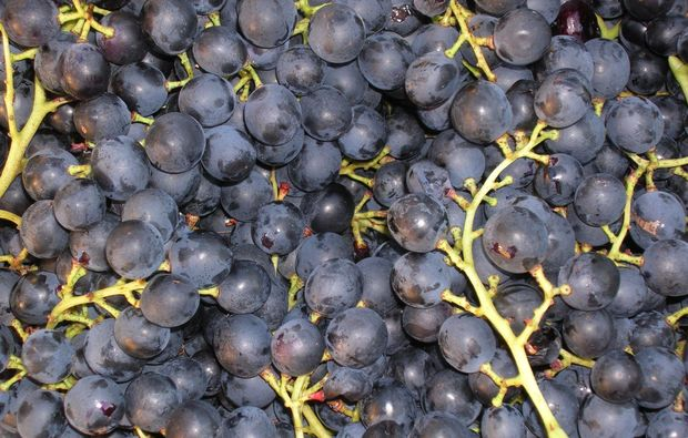 weinverkostung-perg-trauben