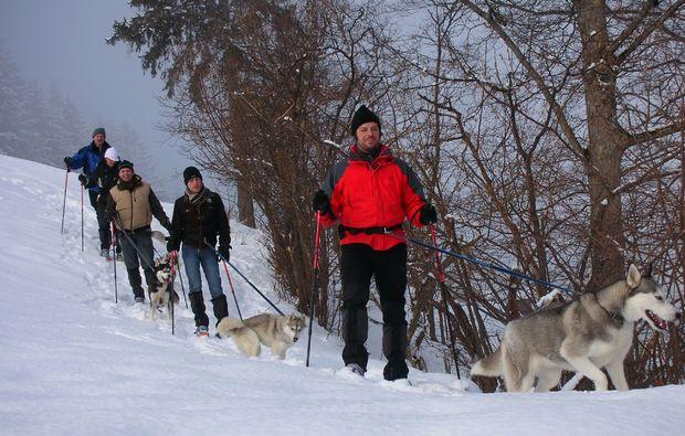 husky-trekking-nueziders-erlebniswanderung