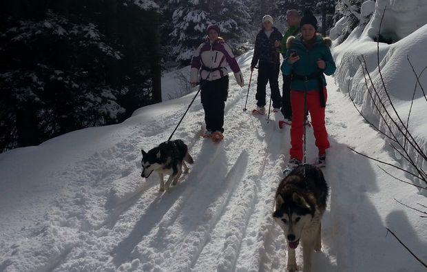 husky-trekking-nueziders1481733545