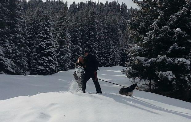 snow-dog-husky-trekking