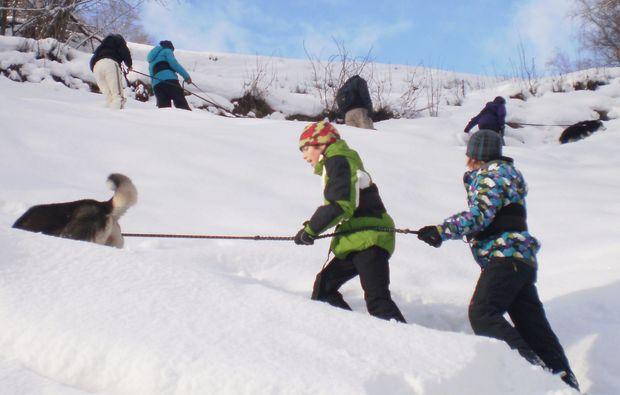 trekking-husky-snow