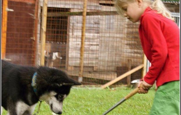 schlittenhunde-workshop-alt-nagelberg-umgang