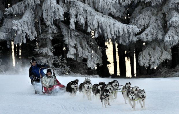 schlittenhunde-workshop-etlas-winter