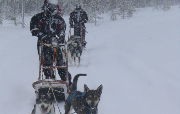 schlittenhundefahrt-saerna-fahren