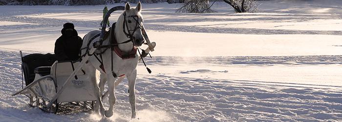 Romantische Pferdeschlittenfahrt für Zwei